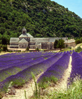 Provence biking trip photo